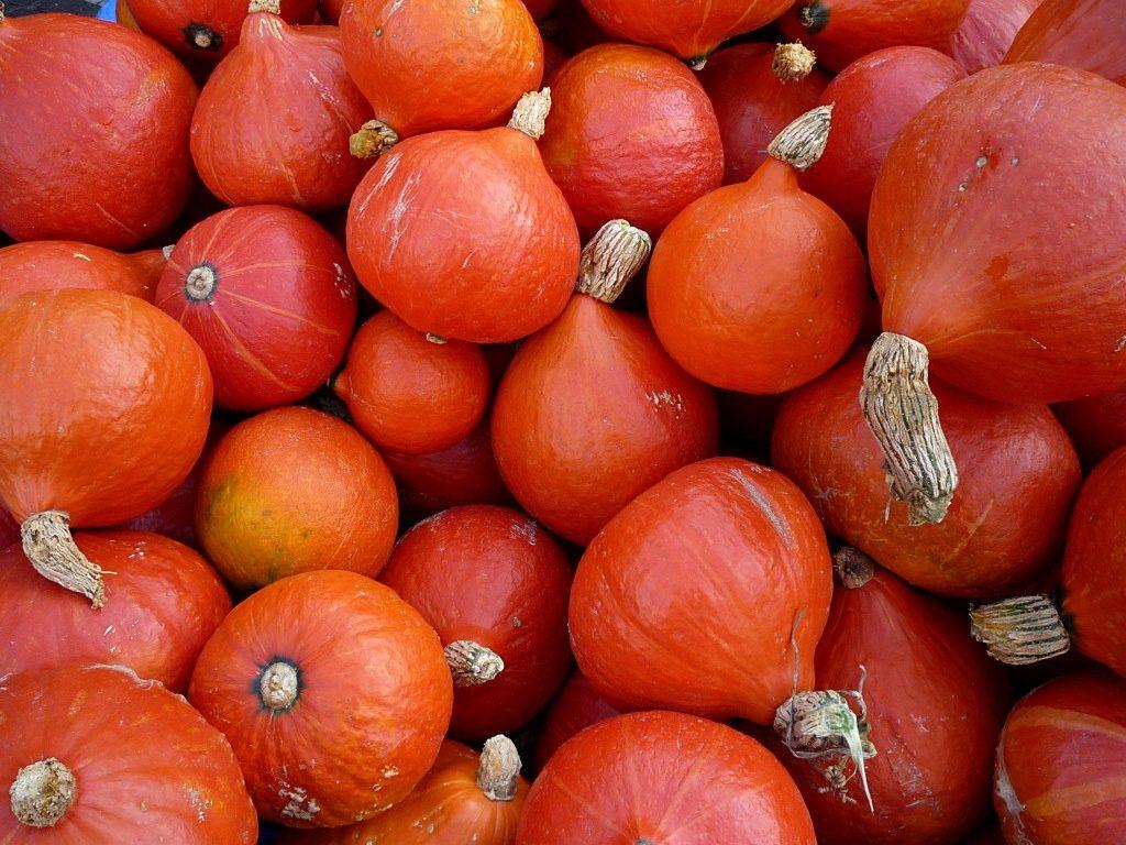 pumpkins_hokkaido_vegetables
